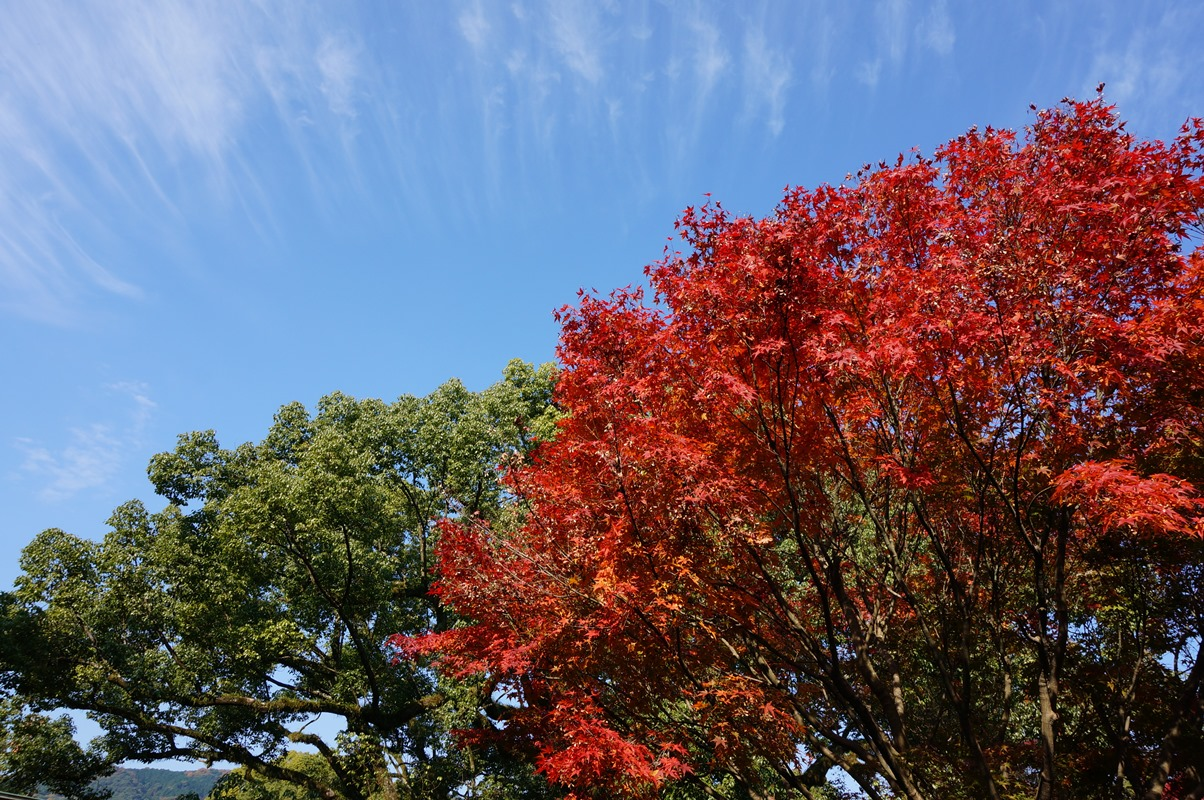 20141124_Dazaifu-13
